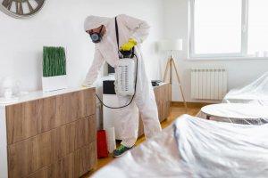 איך להכין את הבית לקראת הדברה