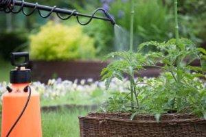 איך ניתן לשמור על גידולי הירק בגינה ללא מזיקים?