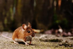 5 סיבות להזמין לוכד עכברים ולא לעשות זאת לבד